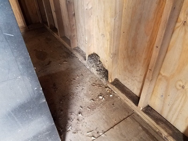 Mouse-droppings-in-a-garage