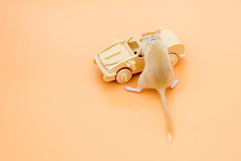 Mouse-getting-inside-the-car