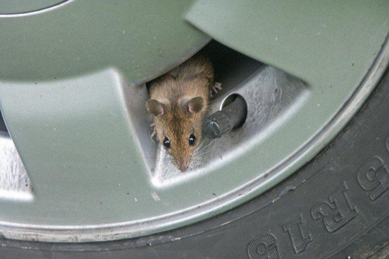 Mouse-wheel-hole